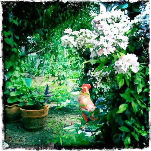 AnetaGenova_garden w rooster
