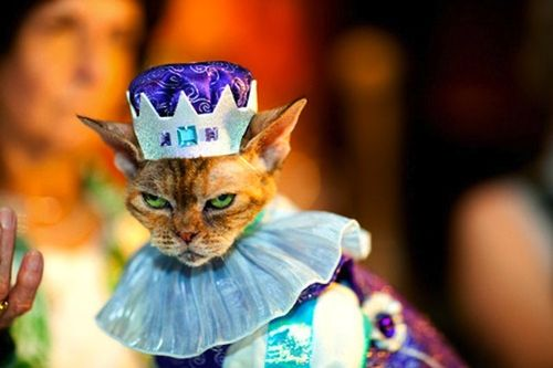 Cat-fashion-show-1